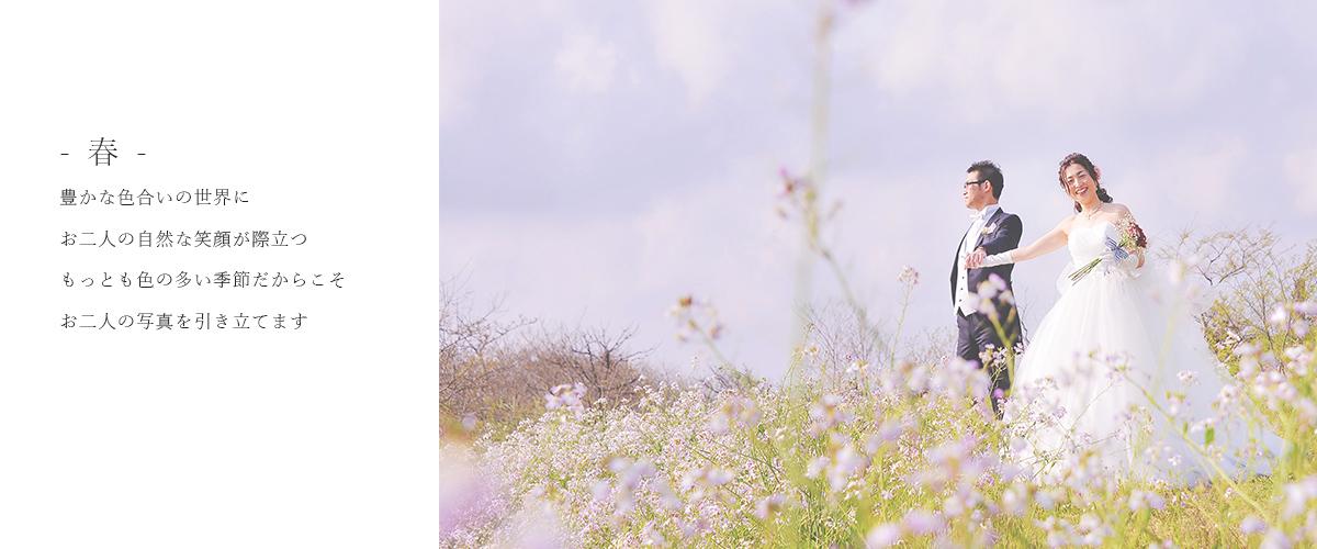 春鳥取でドレスを着てフォトウェディングを撮影しております